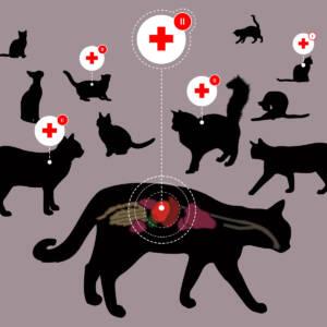 Kissoillakin voi olla diabetes!